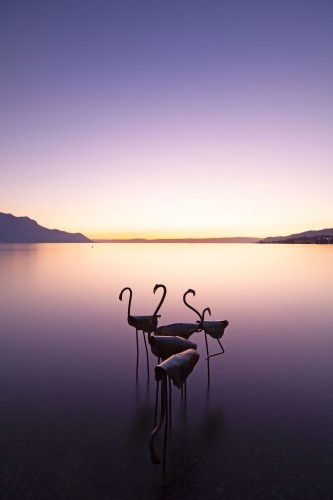 Surrealistic flamingos at Montreux